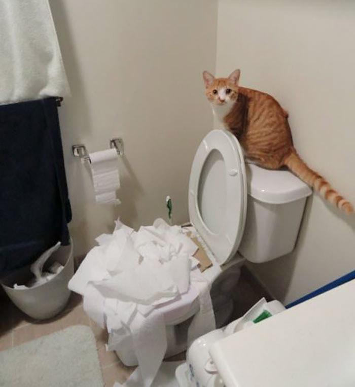 c469e44aa7a2 Εκπαιδεύοντας τη γάτα μου να πηγαίνει τουαλέτα. Νομίζω ότι τα πάει πολύ καλά