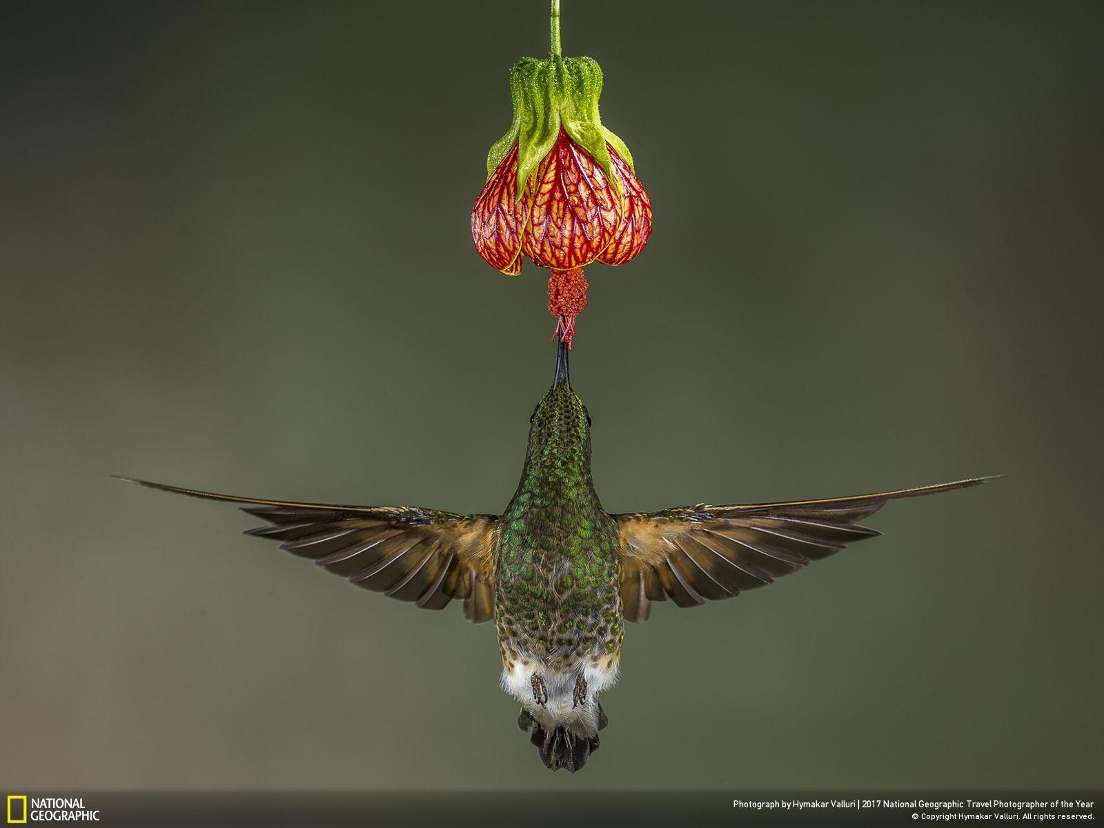 Πώς να πάρει ένα μεγάλο πουλί για δωρεάν