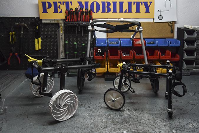 ac37689a9874 Η λογική του αναπηρικού αμαξιδίου είναι να μπορούν τα παραπληγικά και  τετραπληγικά ζωάκια να κινούνται στο σπίτι και στο φυσικό τους περιβάλλον  με την ιδία ...