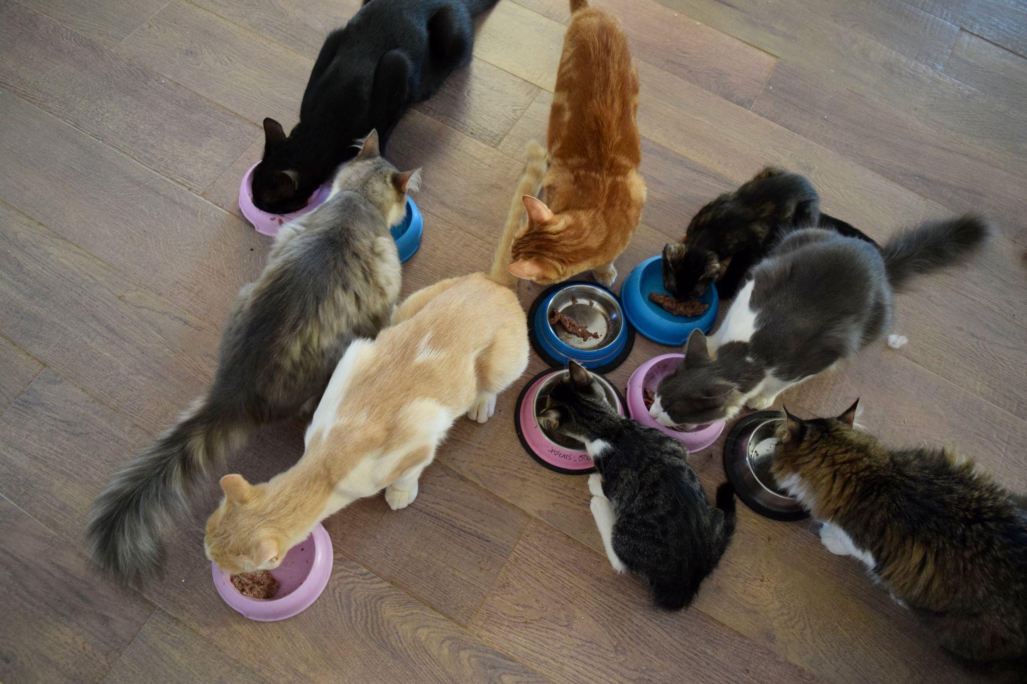 6cf4ef5b5934 Το περιοδικό φιλοξενεί την είδηση ότι ιδιωτικό καταφύγιο για γάτες στο ελληνικό  νησί ψάχνει κάποιον για δουλειά με μοναδική προϋπόθεση «να νοιάζεται για  τις ...